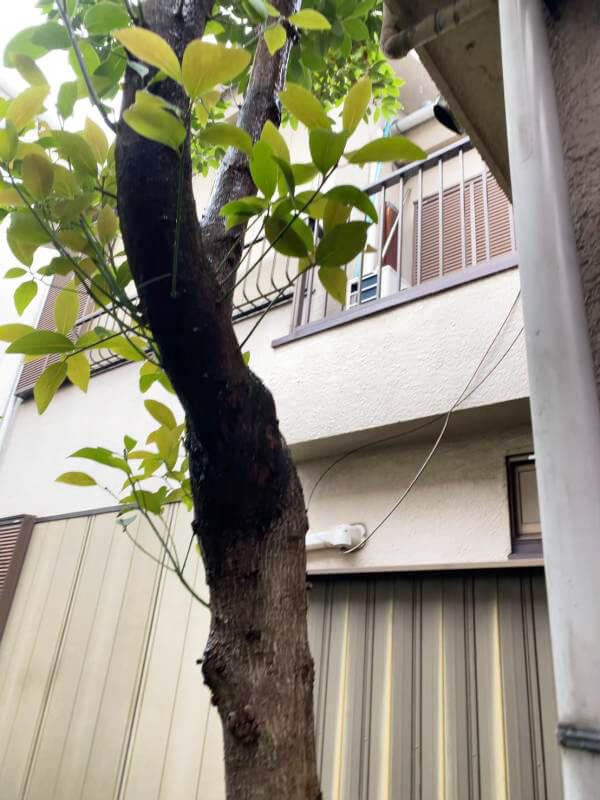 庭 南小岩 再建不可・猫のオシッコ悪臭の家